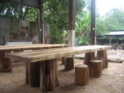boomstamtafel op boomstampoten
